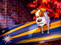Secret Life of Pets: Off the Leash! Ride at Universal Studios Hollywood